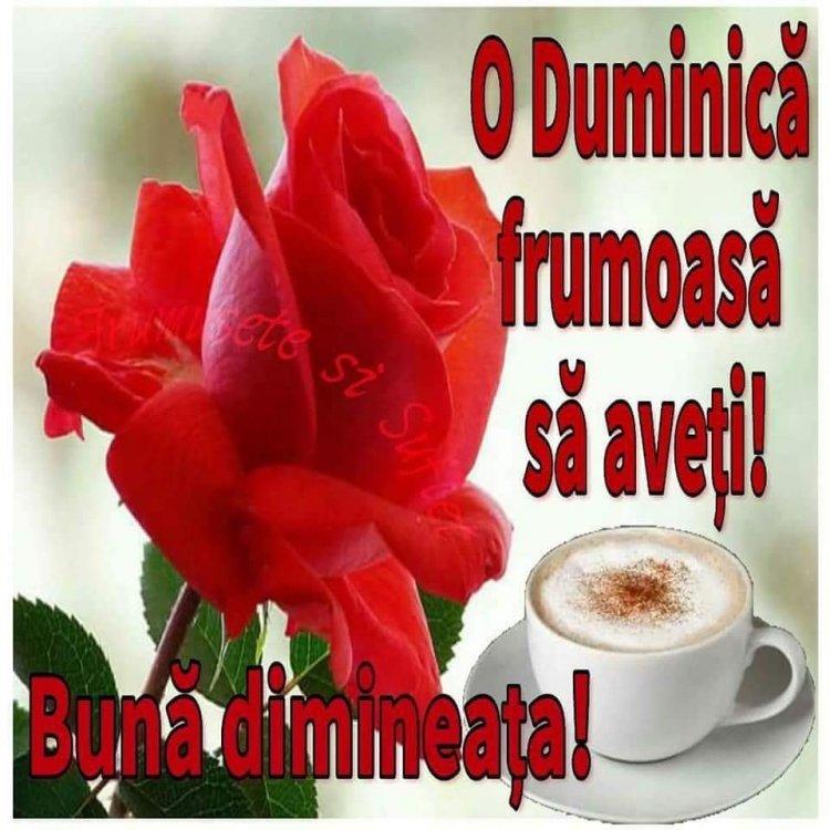FB_IMG_1532241651090.jpg