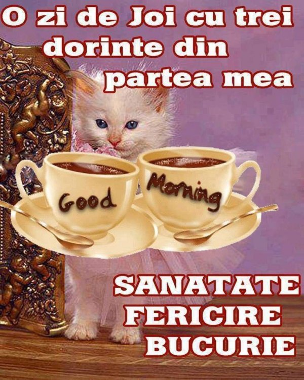 FB_IMG_1544684625259.jpg